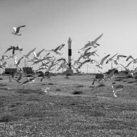 Taking Flight, Dungeness
