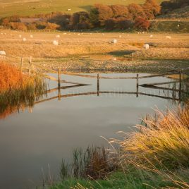Autumn Colours Of The Cuckmere Haven