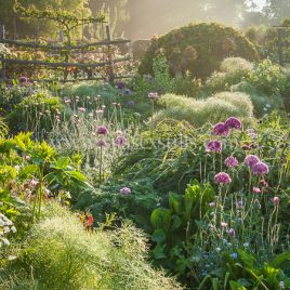 Early Morning In The High Garden, Great Dixter