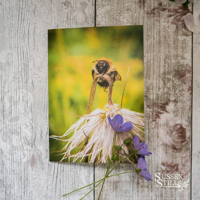 Bee greeting card by Nicky Flint