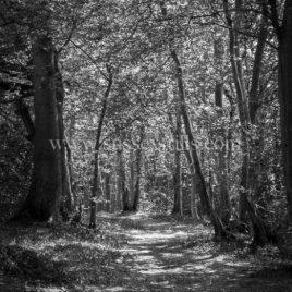 Old Bodiam Road