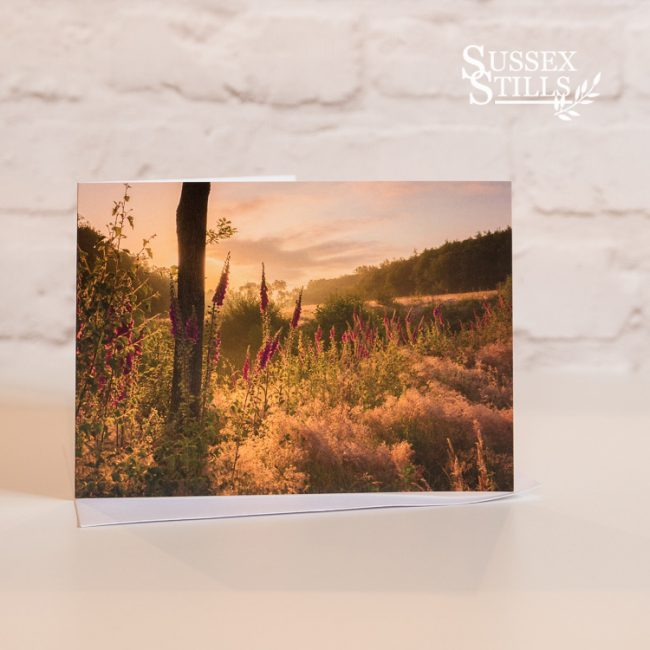 Foxgloves At Dawn, greeting card by Nicky Flint