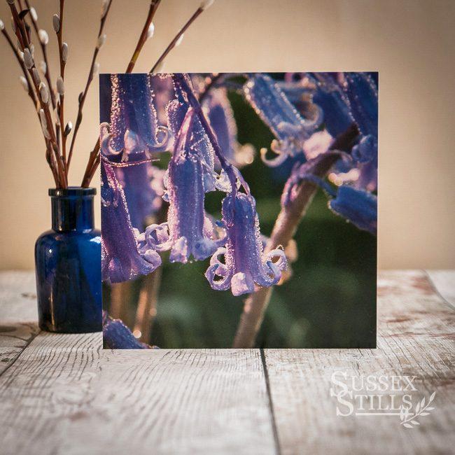 Bluebells & Dew, greeting card by Nicky Flint