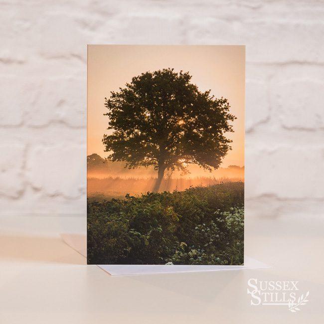 Oak at Dawn, greeting card by Nicky Flint