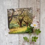 Traditional Orchard In Spring, greeting card by Nicky Flint