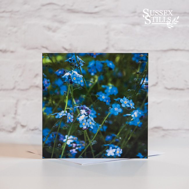 Forget-me-not, greeting card by Nicky Flint