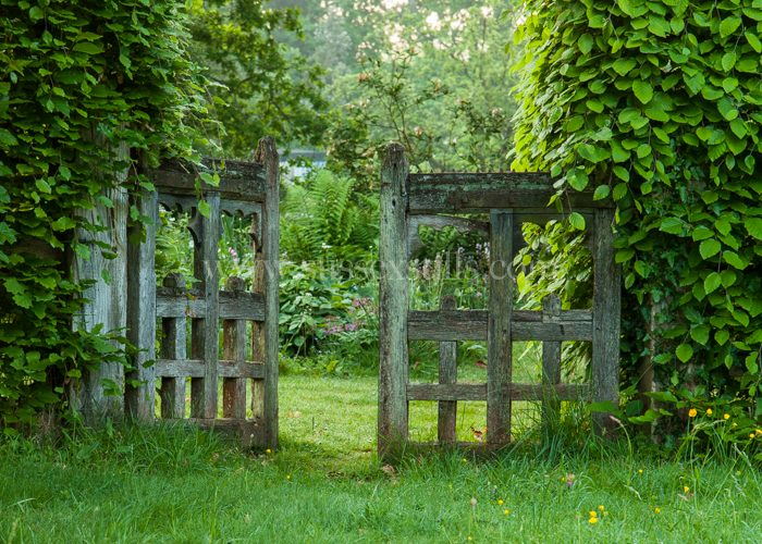 Garden gate greeting card by Nicky Flint