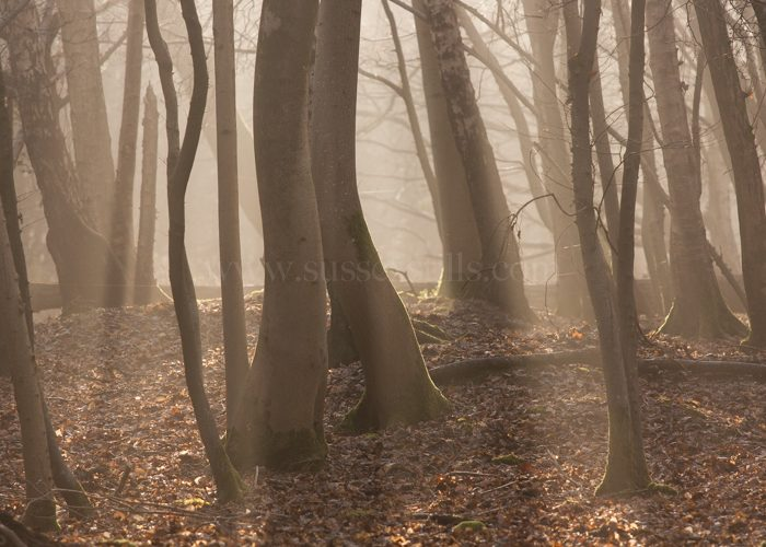 Sunlight & Shadows, winter woods greeting card by Nicky Flint