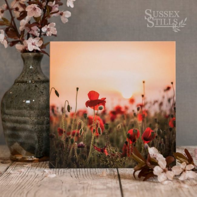'Poppies At First Light' greeting card by Nicky Flint