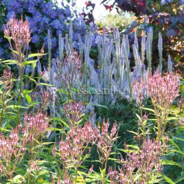 Mixed Border In Summer, greeting card by Nicky Flint